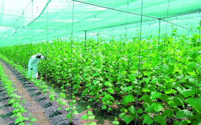 Oman Agricultural Development Fund reviews 8 new projects